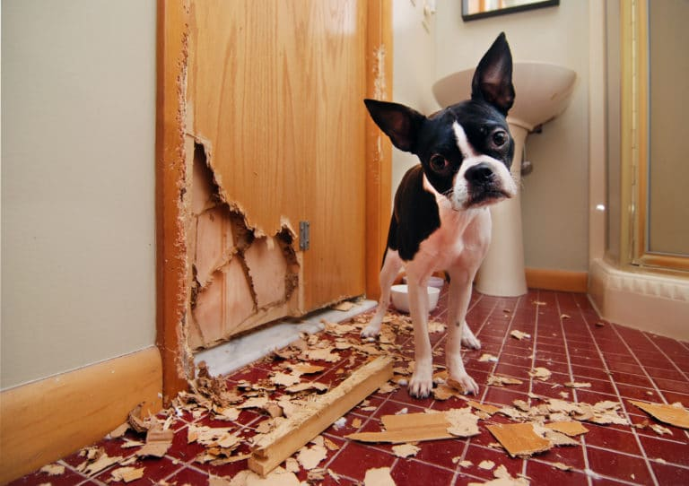 With Pet Ownership on the Increase are Landlords Ignoring a Huge Market